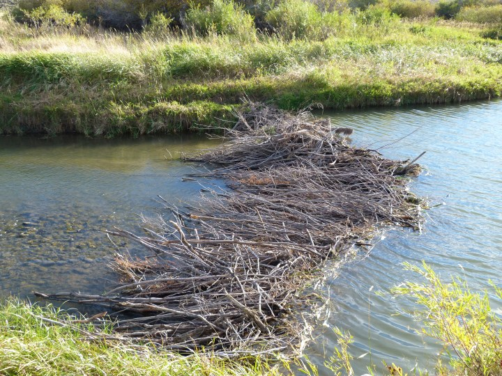 One of the Beaver dams