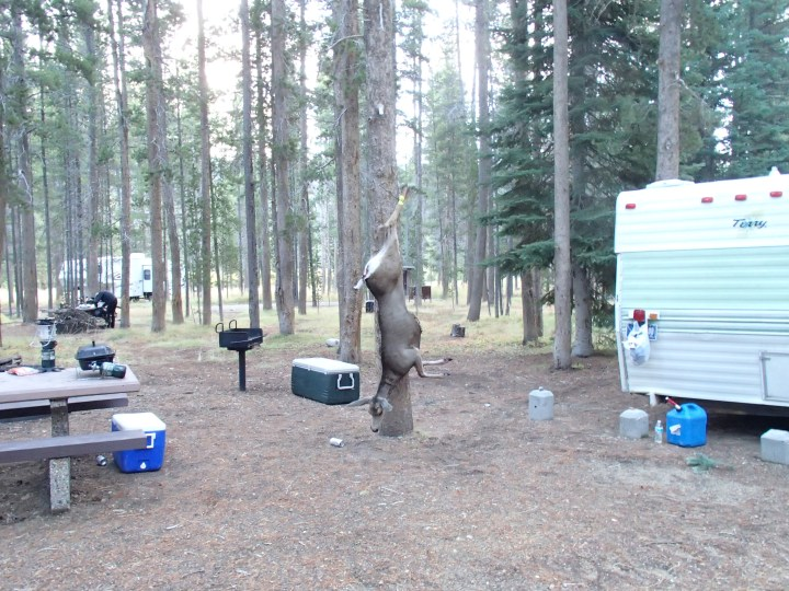 It is now the start of the hunting season, and we found this grizzly scene next to our tent. Time to wear our high viz jackets I think
