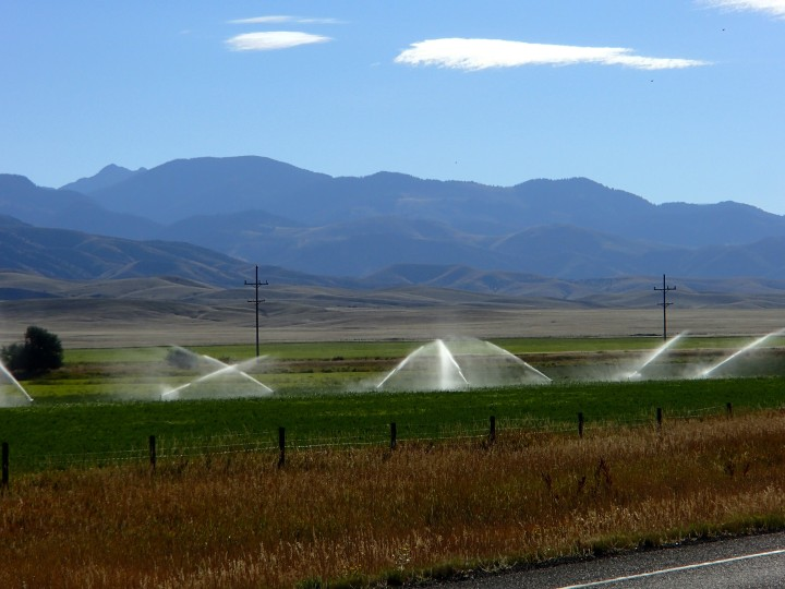 Gallons of water are sprayed onto the field to grow enough grass for the cattle, while the rivers and reservoirs are nearly empty