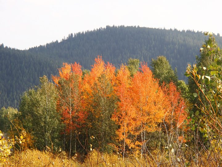 Fall is now well under way and the Aspen colours are stunning
