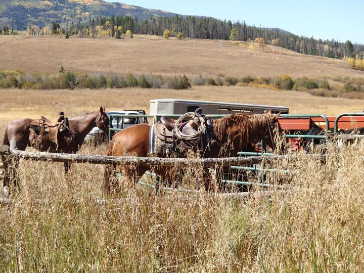 These guys were working a bit harder rounding up cattle