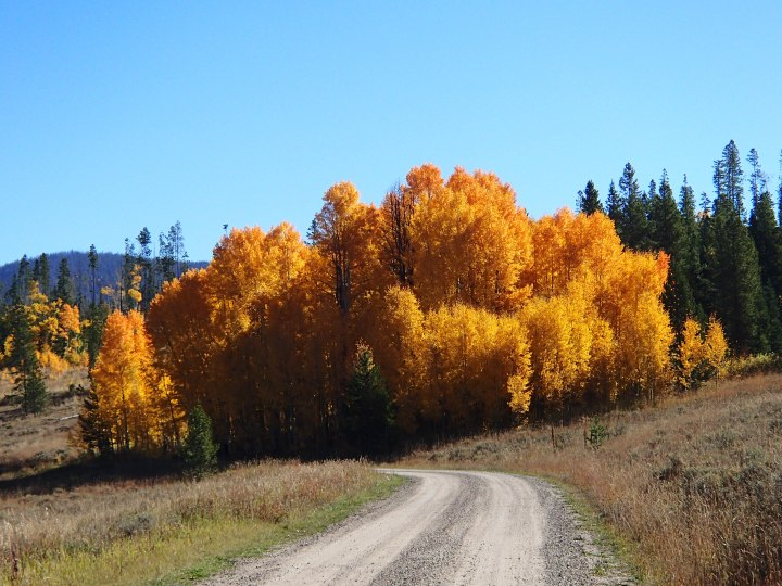 The colours of the Aspen were simply stunning